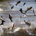 Help Stop the Asian Carp Shake!